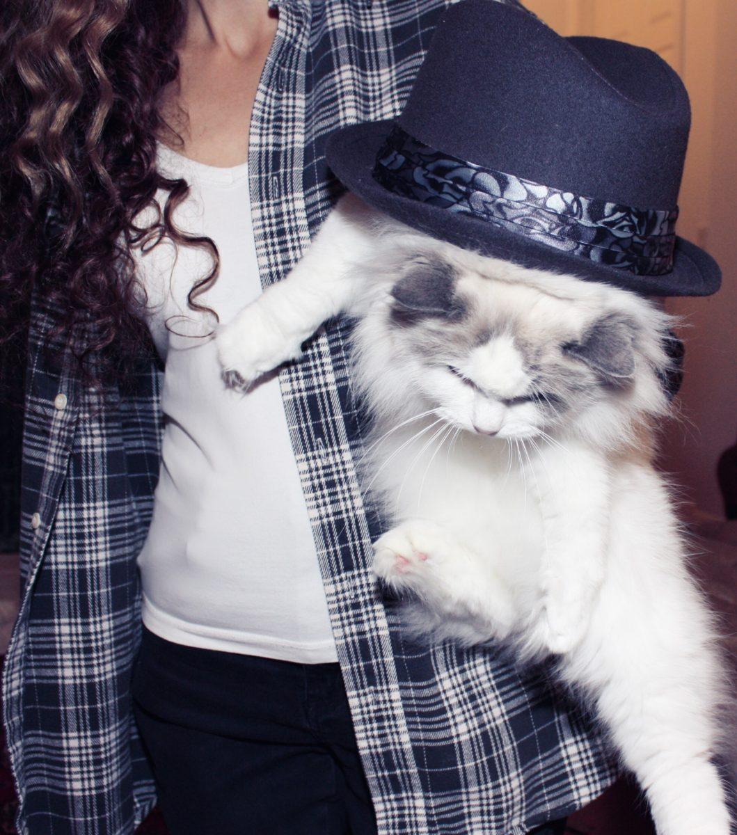 Ragdoll cat in hat